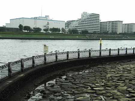 隅田川 7
