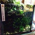 【作品】第26回日本観賞魚フェア 水槽ディスプレイコンテスト 60cm水槽部門 準優勝