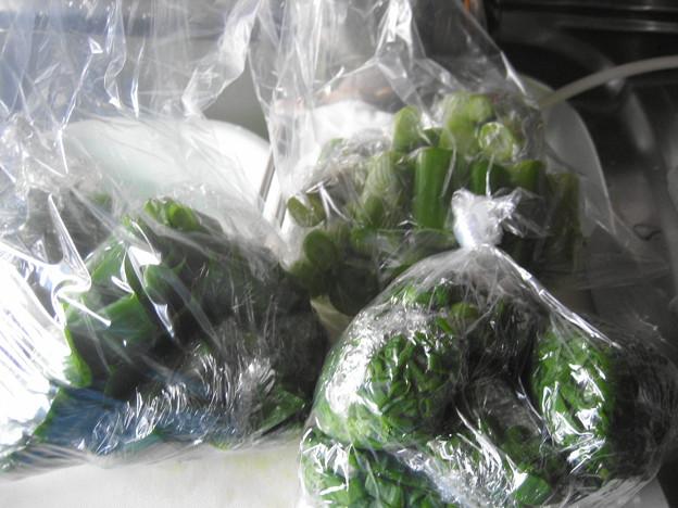 玉ねぎ葉3分の2、小分け冷凍保存へ