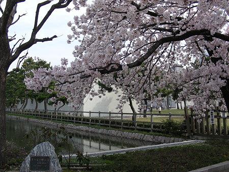 早川堀復元地の桜