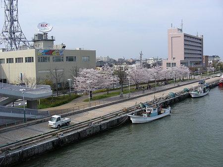柳都大橋から見るuxtvそばの桜