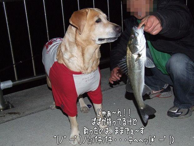 s-myu2008_1224(078)