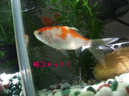 s-myu2009_0428(056)