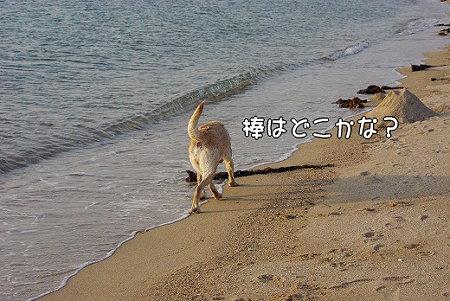 s-myu2009_0430(184)