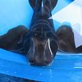 Photos: ネコザメ