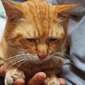 写真: 2010年5月26日のボクチン(6歳)