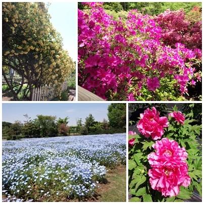 清水公園の花々
