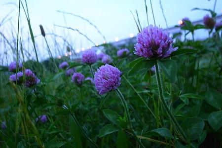 灯を眺める花