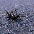 Photos: 蟋蟀の道
