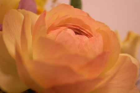 暖色の鞠花