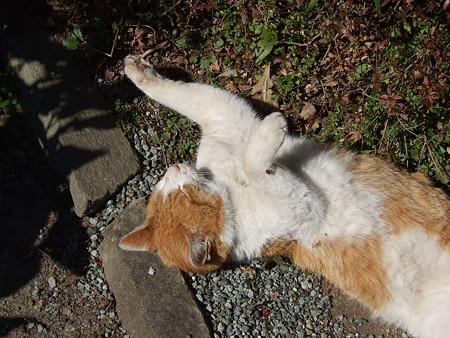 小春猫の寝相