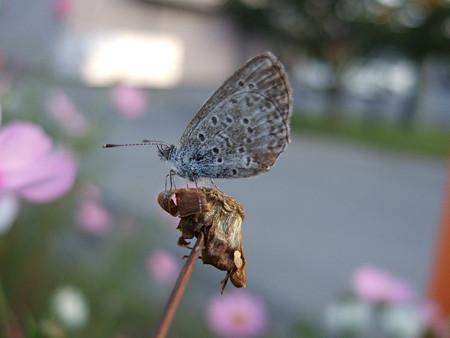 小蝶の一息