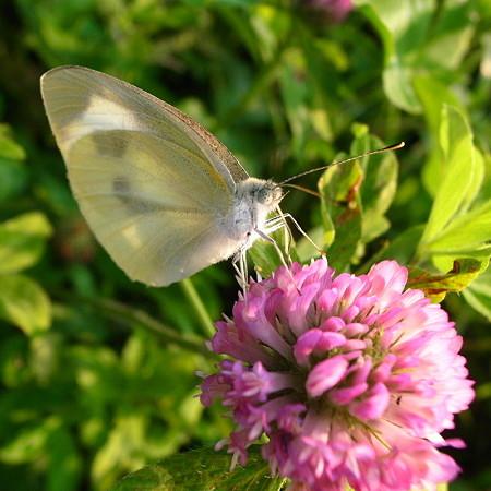 赤花と白蝶(食事中)