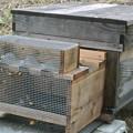 Photos: ミツバチの巣箱