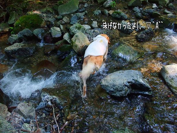 s-2008_0726myu0080