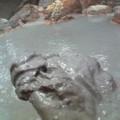 写真: 泥湯の泥 熱くてやわらかい