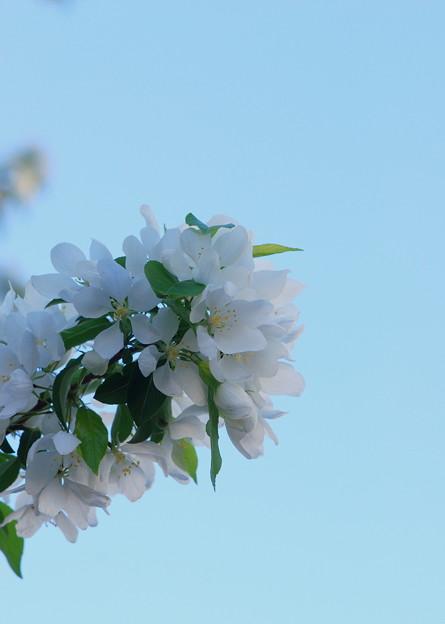 Spring Snow 5-21-14