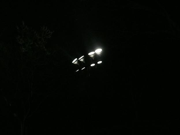 姫路城 花あかり ライト