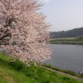 写真: サクラ(フォト蔵ニュース掲載記念)