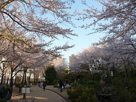 090409-川口駅の桜 (5)