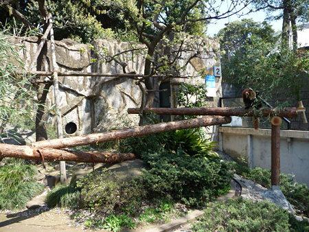 090409-野毛山動物園 レッサーパンダ