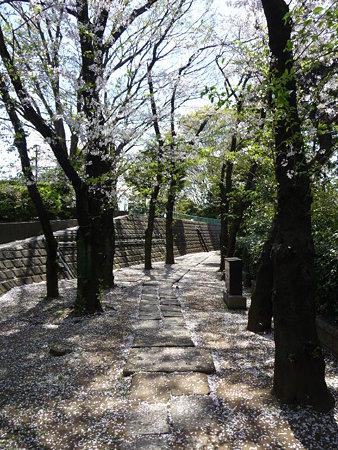 090409-野毛山公園の桜 (1)