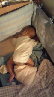 写真: ベッド隅っこで行き倒れてるでび。