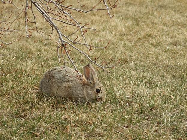 まゆ毛ウサギ1
