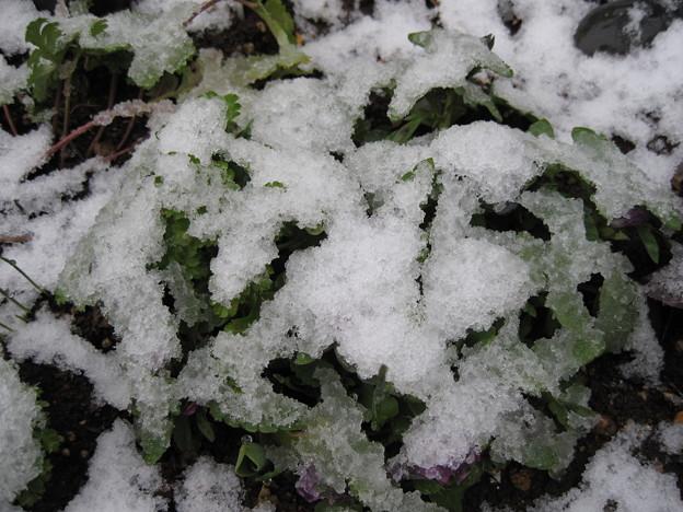 IMG_1709-初(積)雪