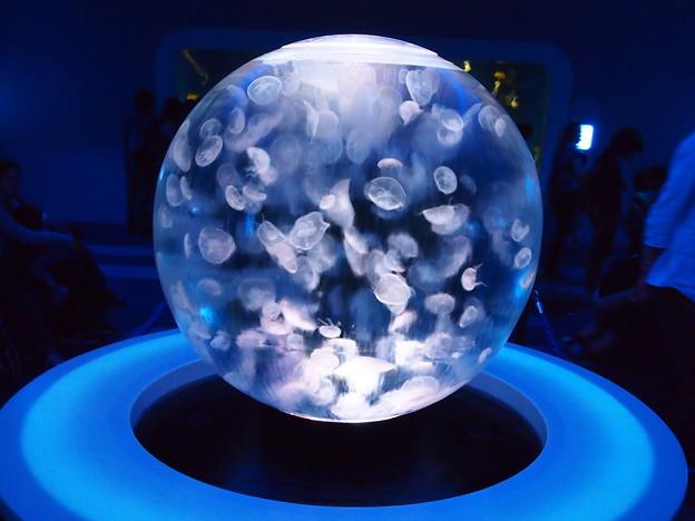 新江の島水族館 球体展示