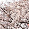 写真: 2009_0329_145019-P1020139