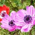 写真: 2009_0416_130456-P1020386