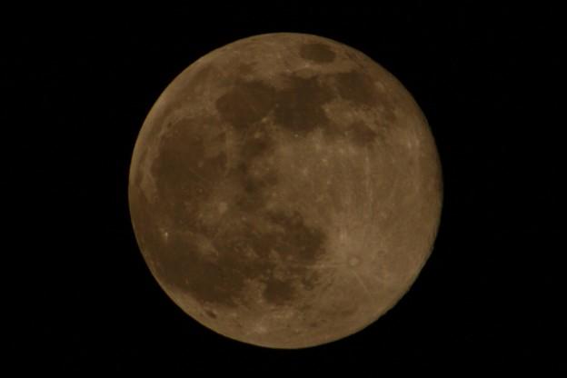 満月でございま~す960mm