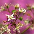 Photos: 花に葉っぱが生ってきた^^