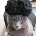 猫! ねこ! ネコ!