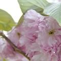 写真: 2014-05-20