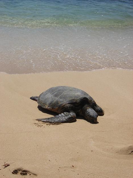 写真: ラニアケアビーチ