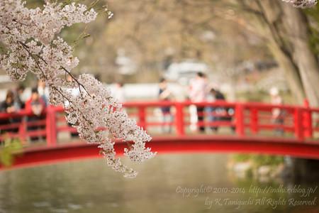 桜のむこう