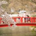 Photos: 桜のむこう