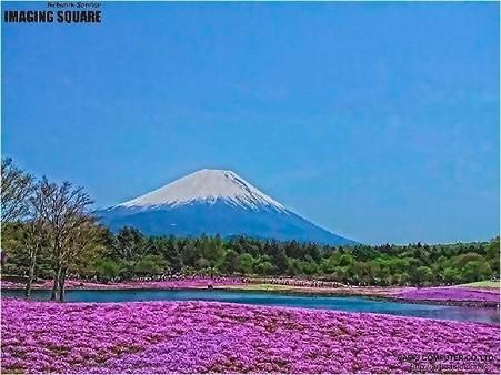 富士芝桜(HDRアートクラフト・中)