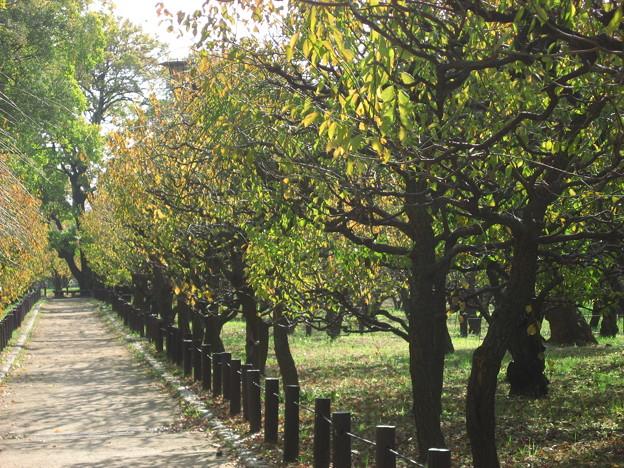 梅林の秋。。