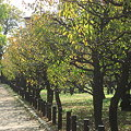 Photos: 梅林の秋。。