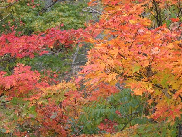 写真: 下小池の紅葉