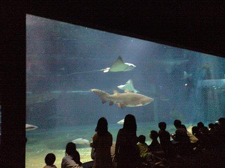 サメのお食事タイム (大洗アクアワールド)
