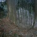 Photos: 001701