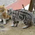 写真: 猫vs猫