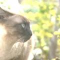 Photos: そっぽを向いた猫