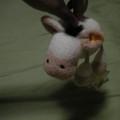 写真: シュタイフの羊?