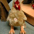 写真: シュタイフの鶏