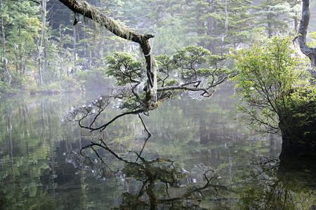 2008.08.12 神降地 明神池